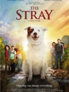 The Stray filmini izle